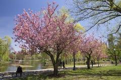 Jardin public de Boston avec les premiers signes du ressort Image stock