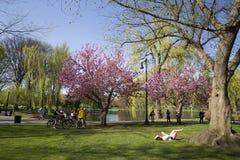 Jardin public de Boston avec les premiers signes du ressort Image libre de droits