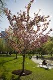Jardin public de Boston avec les premiers signes du ressort Photos libres de droits