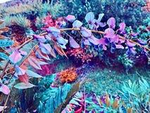 Jardin rêveur images stock
