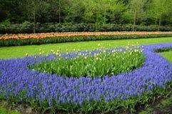 Jardin romantique de tulipe image stock