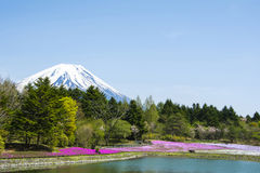 Jardin rose de mousse avec le mont Fuji Photo libre de droits