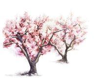 Jardin rose fleurissant d'arbre au printemps illustration de vecteur