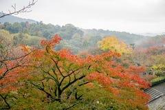 Jardin rouge d'Autumn Japanese Photographie stock
