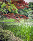 Jardin rouge et vert, Kyoto, Japon Images libres de droits