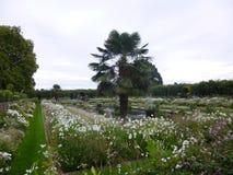 Jardin royal de blanc de palais de Kensington Photographie stock