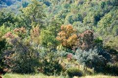 Jardin sauvage de montagne pendant l'automne Image libre de droits