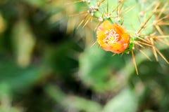 jardin sauvage de vert de fleur de fleur de cactus de désert photo stock