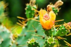 jardin sauvage de vert de fleur de fleur de cactus de désert images stock
