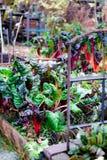 Jardin secret caché en automne Photographie stock