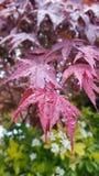 Jardin sous la pluie Photographie stock
