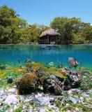 Jardin sous-marin photographie stock