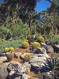 Jardin sud-américain Photographie stock libre de droits