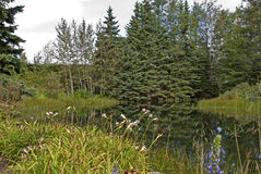 Jardin tranquille avec l'étang Images stock
