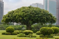 Jardin tranquille, un paradis sur terre. Images stock