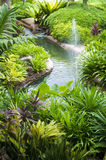 Jardin tropical Photographie stock libre de droits