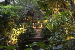 Jardin tropical Photo stock