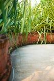 Jardin tropical Photos stock