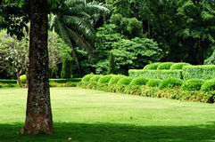 Jardin tropical Photos libres de droits