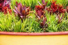 Jardin tropical après douche Photographie stock libre de droits