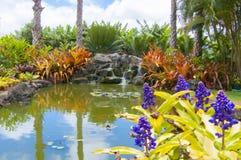 Jardin tropical avec le petit kawaii Hawaï d'étang et de fleurs Photo stock