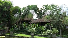 Jardin tropical avec les bananiers, la paume et beaucoup de fleurs colorées Réservoir d'eau avec la carpe de koi photo stock