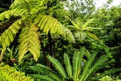 Jardin tropical chez Monte au-dessus de Funchal Madère Photo stock
