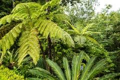 Jardin tropical chez Monte au-dessus de Funchal Madère Photographie stock libre de droits