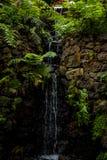 Jardin tropical chez Monte au-dessus de Funchal Madère Images libres de droits