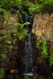 Jardin tropical chez Monte au-dessus de Funchal Madère Image stock