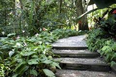 Jardin tropical d'épice Image libre de droits