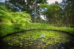 Jardin tropical de balata Le balata est un jardin botanique situé sur l'itinéraire De photographie stock libre de droits