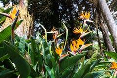 Jardin tropical Madère Images libres de droits