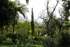 Jardin tropical Madère Photo libre de droits