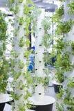 Jardin urbain Image libre de droits