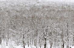 Jardin urbain bloqué par la neige blanc en hiver Photographie stock libre de droits
