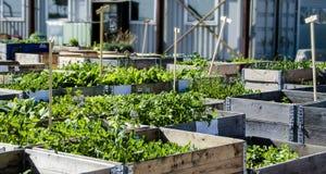 Jardin urbain et agriculture dans le spingtime Photos libres de droits
