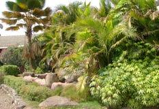 Jardin vert images libres de droits