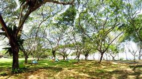 Jardin vert avec beaucoup d'arbres pour camper Photo libre de droits