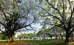Jardin vert avec beaucoup d'arbres pour vous promenade monring Photo stock