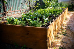 Jardin vert de ressort dans une boîte en bois Photo libre de droits