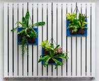 Jardin vertical images libres de droits