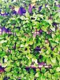Jardin vertical Photo libre de droits