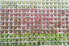 Jardin vertical Photos stock