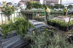 Jardin vertical Photos libres de droits
