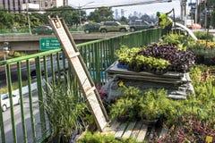 Jardin vertical Image libre de droits