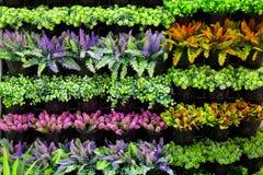 Jardin vertical photographie stock libre de droits