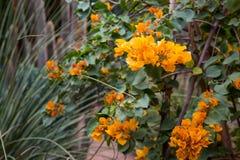 Jardin w Marrakesh Majorelle Zdjęcie Royalty Free