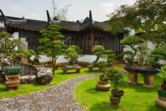 Jardina um bonsai, Singapore Foto de Stock
