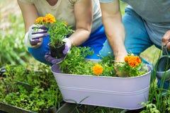 Jardinage aîné de couples Images libres de droits